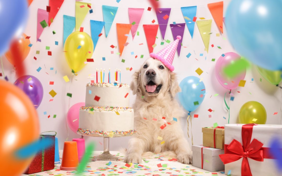 Happy Birthday to The Woof House